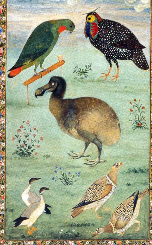 Peinture par l'Artiste Mughal Ustad Mansur de 1625